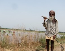 Punjab's water crisis | Public Radio International
